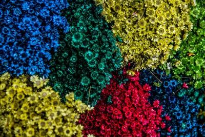 藍色誠實、黃色樂觀 從「6種顏色偏好」看出隱藏性格