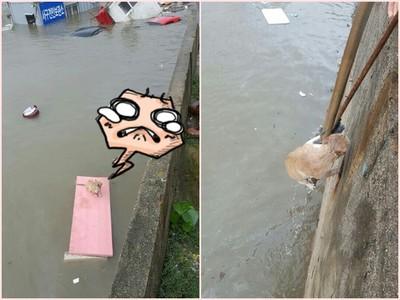 芙蓉颱風重創南韓,小貓咪無助漂在水中...直到暖心人出手