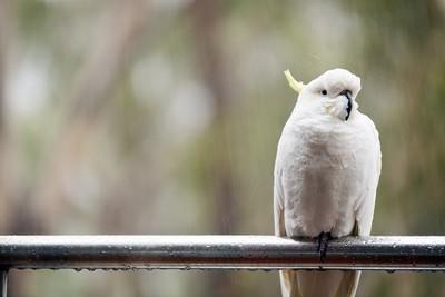 愛鳥的朋友在哪裡? 飼養大全共6招...養鳥新手必知