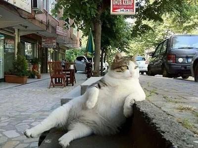 「梗圖懶貓」死掉了,當地居民決定幫牠建個雕像QQ