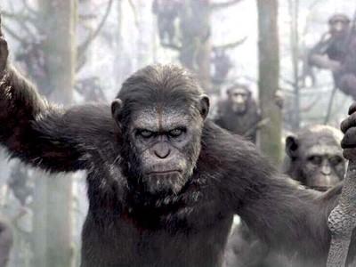 猩球崛起的凱薩為何會說話?網歪:木柵動物園的只是懶