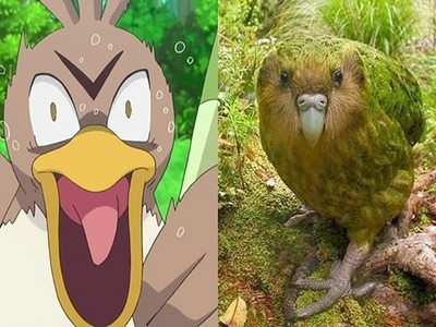 太好吃而瀕臨絕種?紐西蘭蠢笨鳥猶如「大蔥鴨2.0」