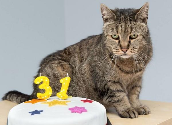 霸氣貓主子慶31歲生日 長壽秘訣竟是「把主人當奴才」。(圖/翻攝自「Westway Veterinary Group」臉書)