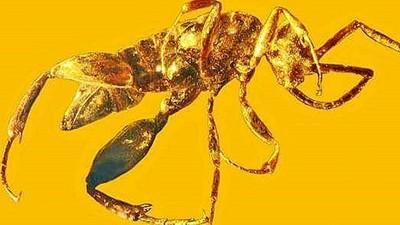 億年前異形「惡夢黃蜂」出土,原來《獵人》嵌合蟻是真的!