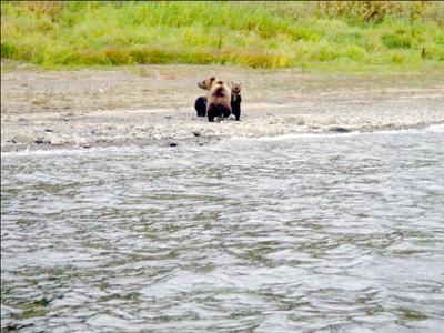因為愛所以放手!熊媽與熊寶「訣別」後心碎渡河離開