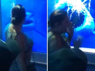 無視警語狂拍水族館玻璃…鯊魚爆衝撞破玻璃!