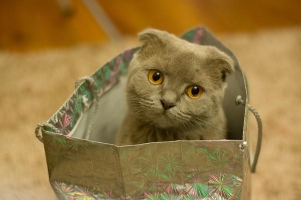 貓,寵物,喵星人(圖/取自librestock網站)