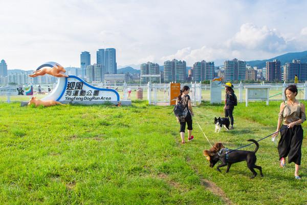 帶毛小孩去青草地奔跑吧!北市3大戶外寵物樂園好好玩