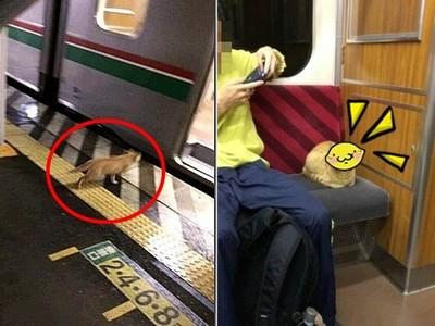 喵星人偷搭火車,不但沒買票...還一副「唱邱臉」