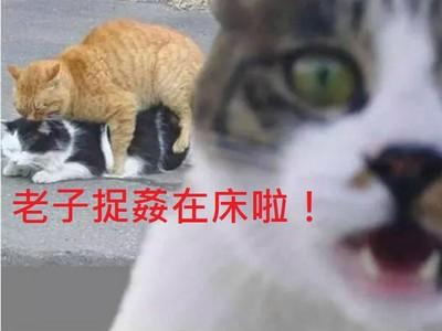 網友加註「神對白」,可愛動物照片大歪樓啦XD