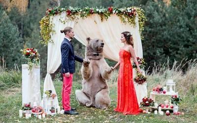 最狂戰鬥民族新人!邀請130公斤大棕熊當證婚人
