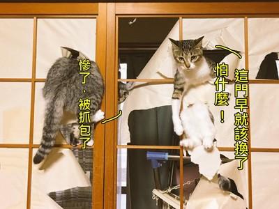 貓皇不要啊!紙門慘被「督」成廢墟,兩隻犯人還悠哉瞪我