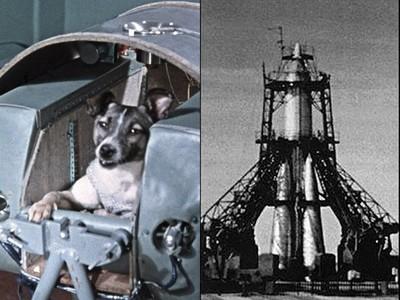 在驚嚇中活生生熱死!流浪狗被當實驗品送上太空船