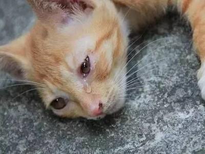 巧遇流浪貓狗拍照打卡..你可能意外害死牠QAQ!