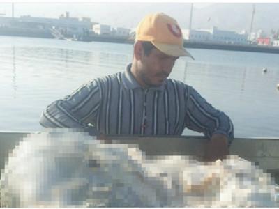 漁夫海上撿到「噁臭石頭」,竟是價值億元的春藥原料