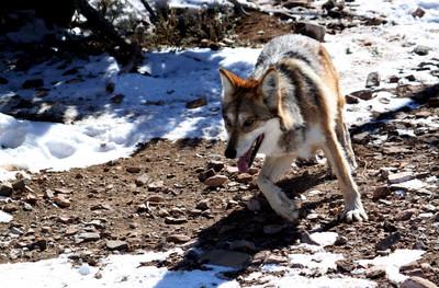 小生翻案「狼來了」解釋為何替威權幫腔