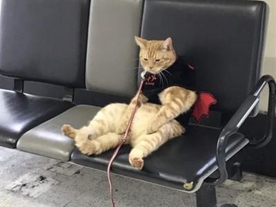走失喵喵煩惱坐機場,傻楞放空:我的奴才不見了...