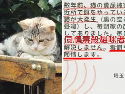 浪貓排泄物清不完!日本民眾竟嘆:同情毒殺貓咪的人