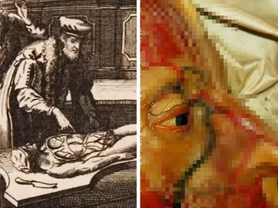 抽離血肉嵌牆上!400年前「真人動脈」製成大體文本