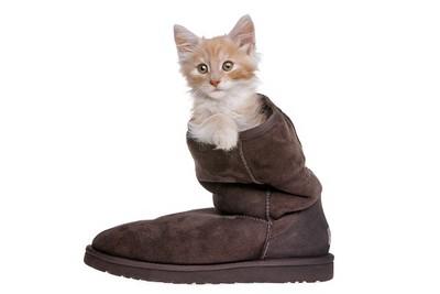貓咪超愛聞臭鞋! 其實...是檢查你有沒有「外遇」?