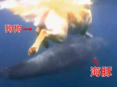 狗狗每天跳海找牠玩!這對跨物種友誼怎麼認識的啦?