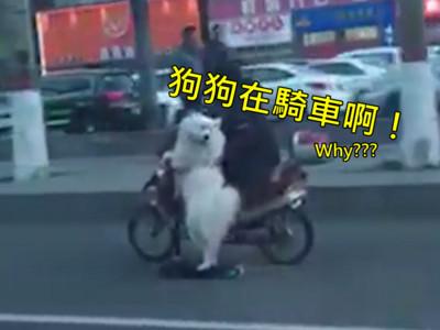還在牽繩遛狗?中國已經「讓狗自己開車」上街啦!