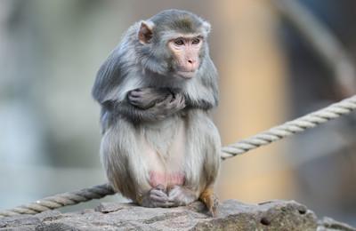 出生12天 男嬰遭潑猴咬頸慘死