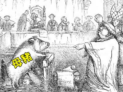 母豬偷吃被判絞刑!「中世紀法庭」連動物都能找律師辯護
