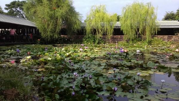 莫內的花園(圖/翻攝自莫內的花園粉絲專頁)