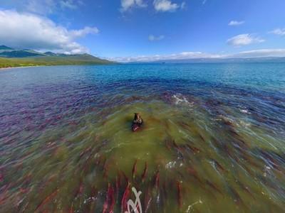 估狗地圖大冒險!輸入「庫頁湖」就能看到熊熊捕鮭魚