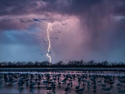 《自然》選出2016年「17大科學美照」 魅影閃電劃破鶴群寧靜