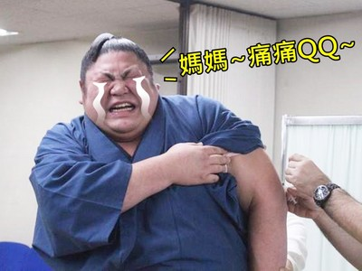胖胖相撲力士敵不過小針頭!五官揪成一團快噴淚了~