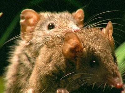 8種動物「獵奇窒息性愛」 頭長陰莖、持續兩周到爽死