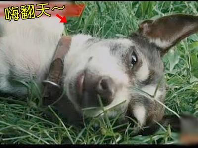 比人還狂!6種「動物嗑藥」實例 狗舔毒蟾蜍ㄎㄧㄤ到暈厥