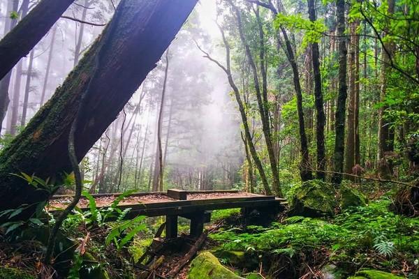 「台灣富士山」納入新年挑戰!登苗栗加里山望絕美雲海