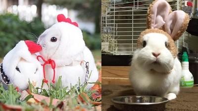 「老婆是我的!」日本兔夫妻IG頻放閃 逼死萬名單身網友