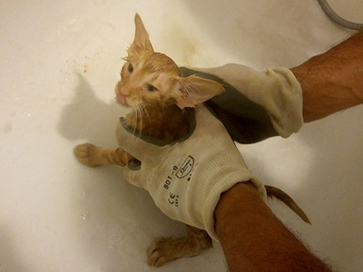 卡牆縫差點死掉,主人玩寶可夢救回牠,醜小貓獲救4個月大變身