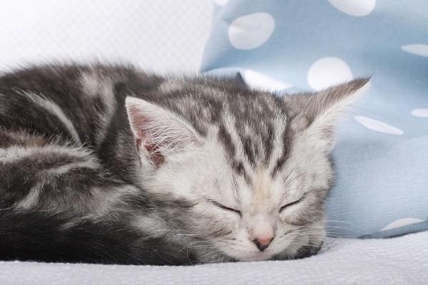 貓,喵星人,寵物,睡覺,睡眠,萌貓(圖/達志/示意圖)