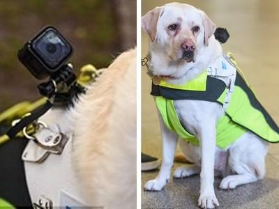 為導盲犬裝攝影機...惡意踐踏舉傘歐打 路人冷血全都錄!
