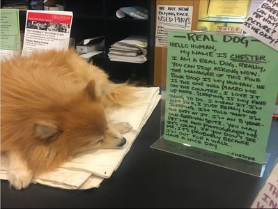 狗狗霸佔櫃台睡整天,書店崩潰公告:係金欸啦!不是玩具~