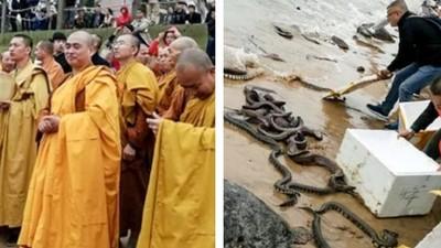 放生變殺生!大陸僧人海邊野放百條蟒蛇 屍堆遍布嚇壞民眾