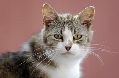 對你眨眼是在示愛? 貓咪「3種眼神」看心情...好萌阿