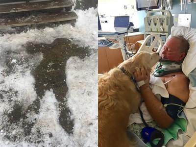 主人癱瘓冰雪中!忠犬緊貼20小時...「狗毛被」救他一命