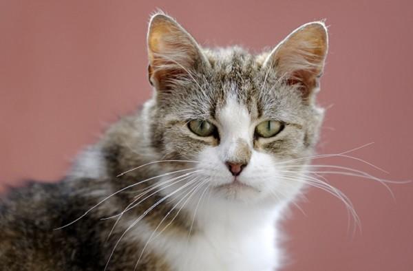 貓,喵星人,寵物(圖/達志/示意圖)