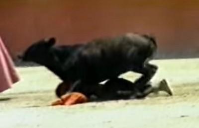 女鬥牛士被撞倒 牛鞭狂頂她臀部!