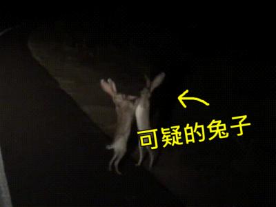 意外爆笑「兔子打架」!無影手打到兩隻融成一隻啦