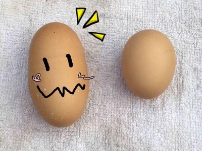 真‧健達出奇蛋,中國母雞大叫一聲拉出「三倍怪蛋」