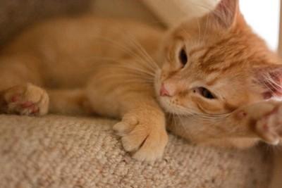 喵皇「爪」下留情! 奴才必學4招...貓貓不再亂抓家具