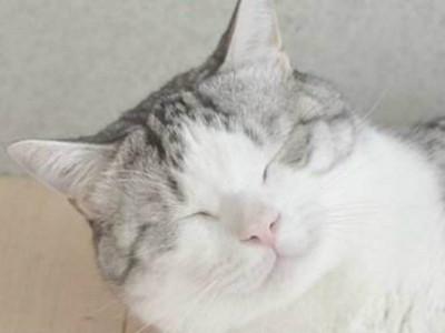 直到愛貓過世7年後,他才懂那眨眼背後的愛..