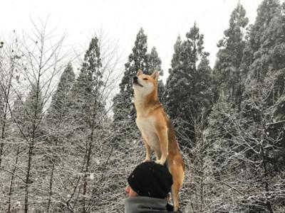 什麼東西都站得上!萌柴在主人頭頂瞇眼看雪,這濃濃禪意怎麼回事